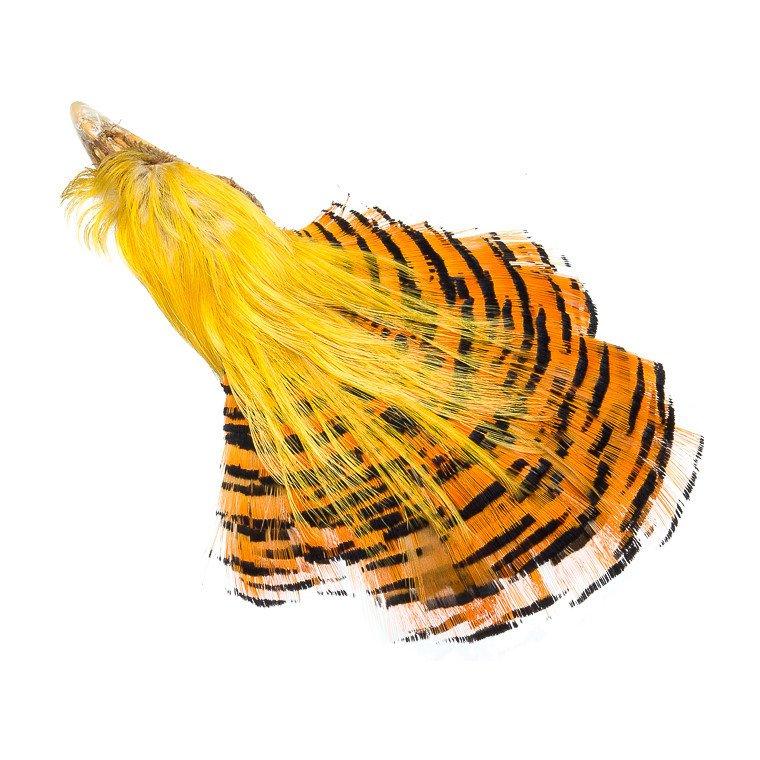 eng_pl_Wapsi-Golden-Pheasant-Complete-He