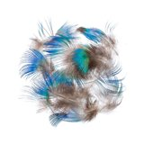 BG Peacock Blue Body Feathers
