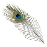 BG Peacock Full Eye Tails