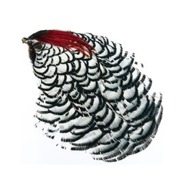 """LADY AMHERST HEAD PHEASANT  /"""" NATURAL /""""   FLY TYING"""
